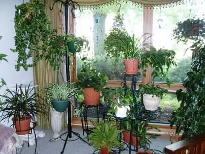 Выносливость комнатных растений