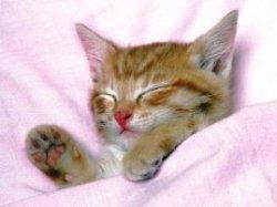Почему мурлыкает кошка?