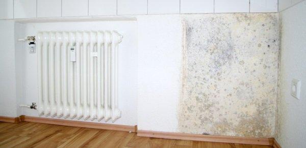Плесень на стенах квартиры