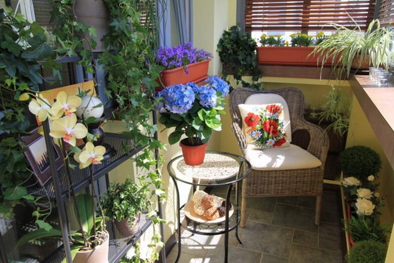 Красиво на балконе разместить цветы фото объекта съемки