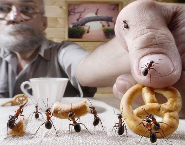 Завелись муравьи в квартире