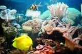 Аквариумные рыбки и уход за ними