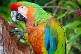 FAQ: как научить попугая разговаривать