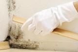 Как удалить запах плесени в квартире?