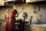 Борьба с тараканами эффективными способами